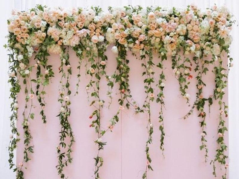 Backdrop cưới hoa dây leo